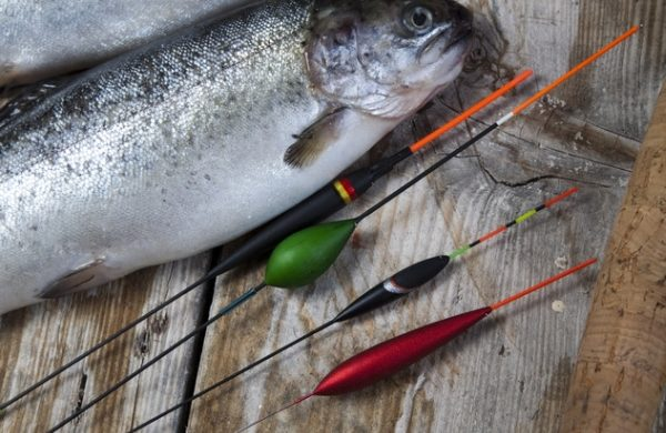 Angeln in Neuharlingersiel – auf Fischzug!